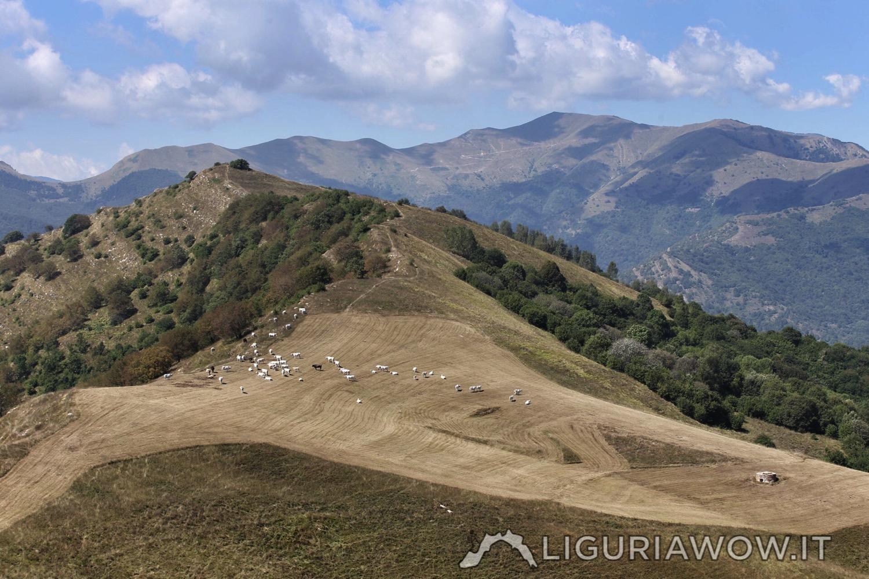 Monte Guardiabella