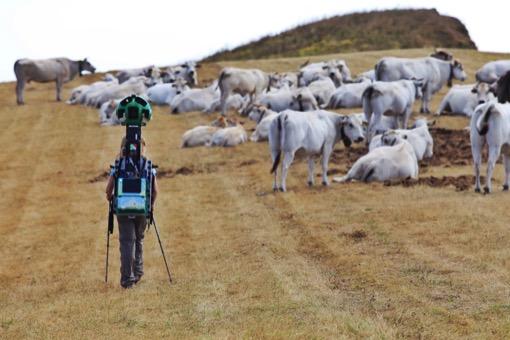 Pascolo di Mucche sul Monte Guardiabella