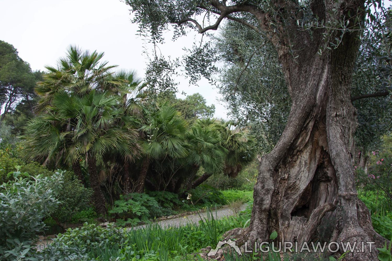 la Piana dei Giardini Botanici Hanbury