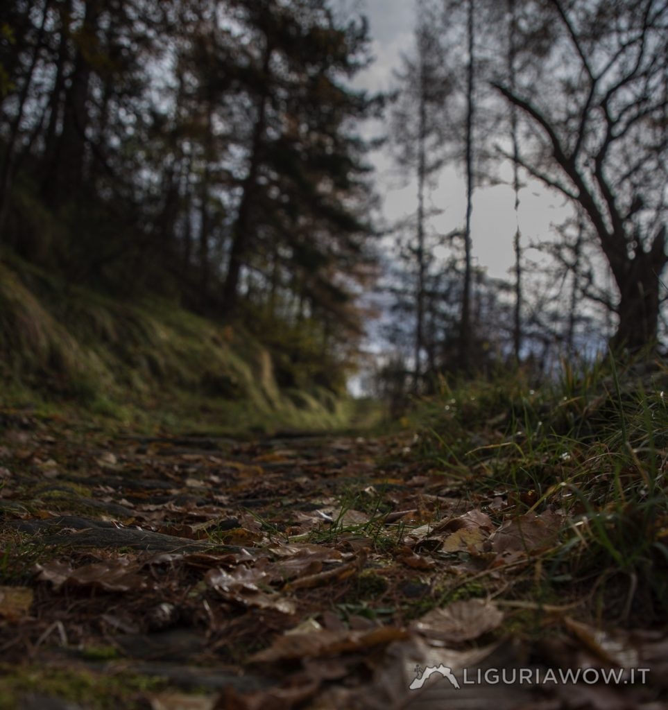 Sentiero Verdeggia Realdo